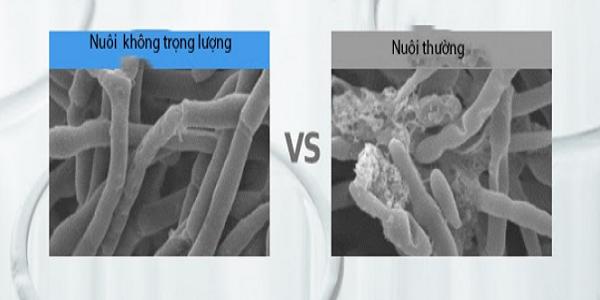 Tế bào được nuôi cấy trong môi trường không trọng lượng phát triển tốt, an toàn với da