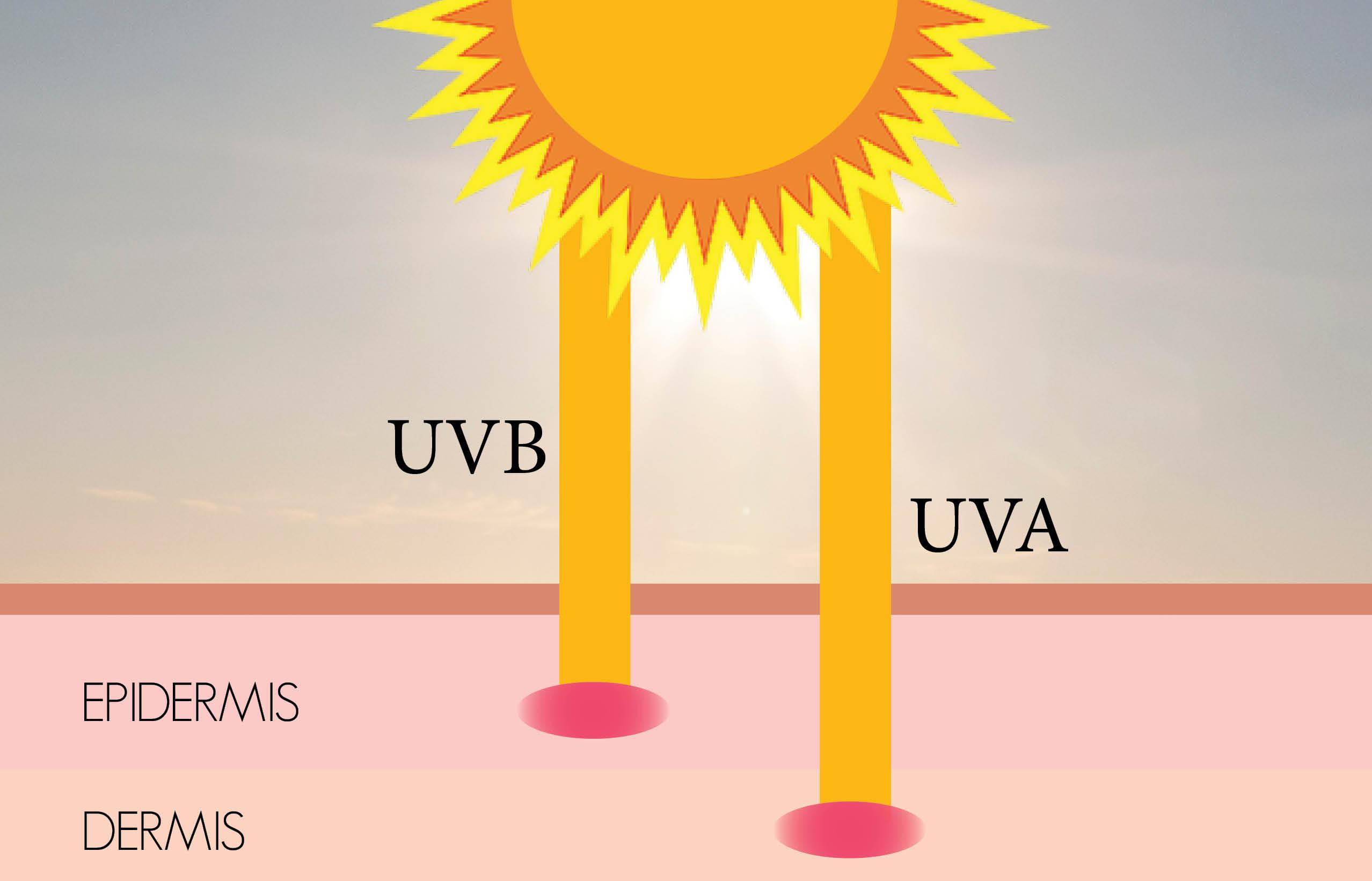 Bức sóng của tia UVA, UVB tác động sâu tới lớp hạ bì của da