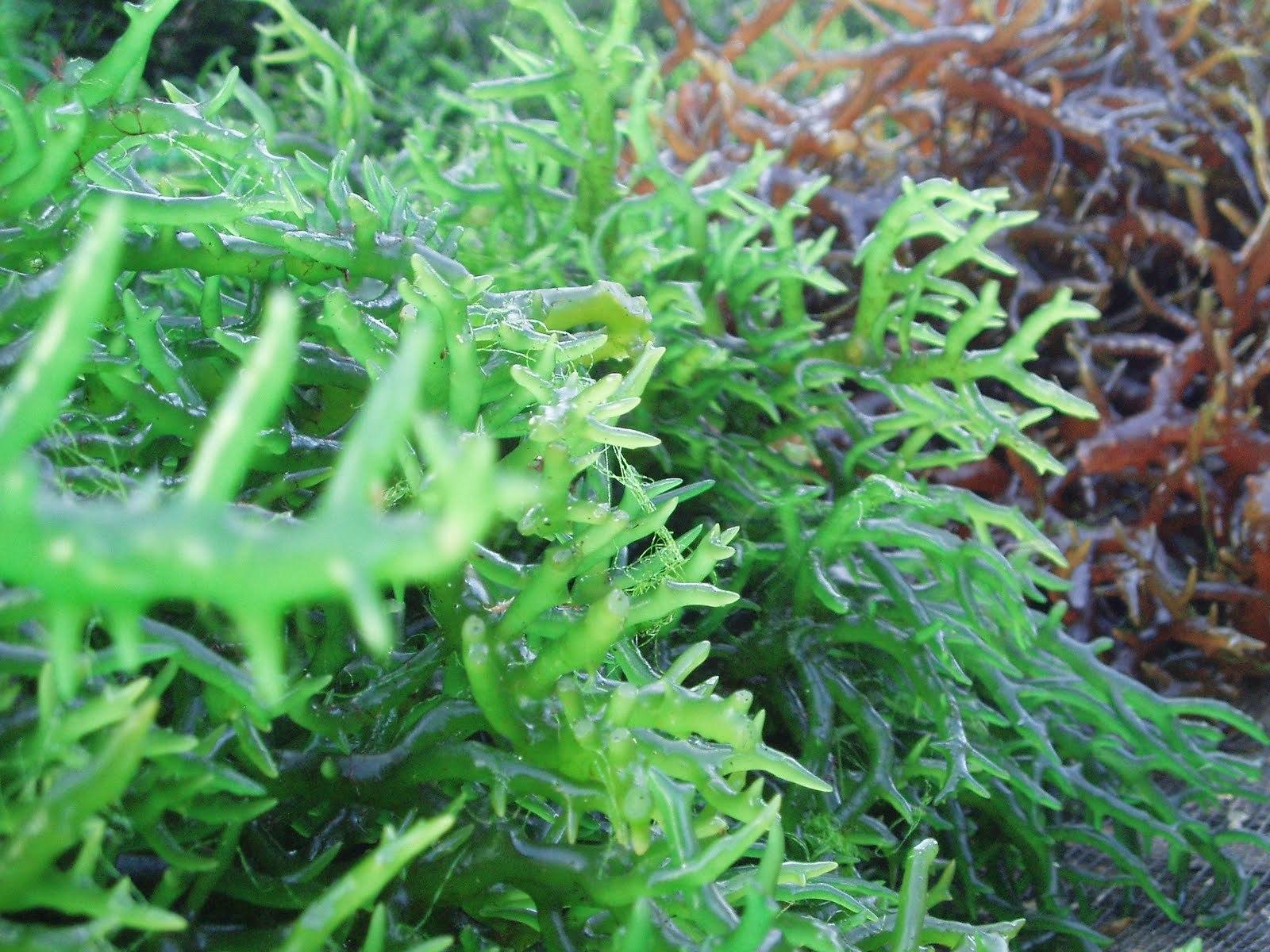 Chiết xuất các loại tảo biển, tinh dầu thực vật cấp ẩm rất tốt cho da nhạy cảm